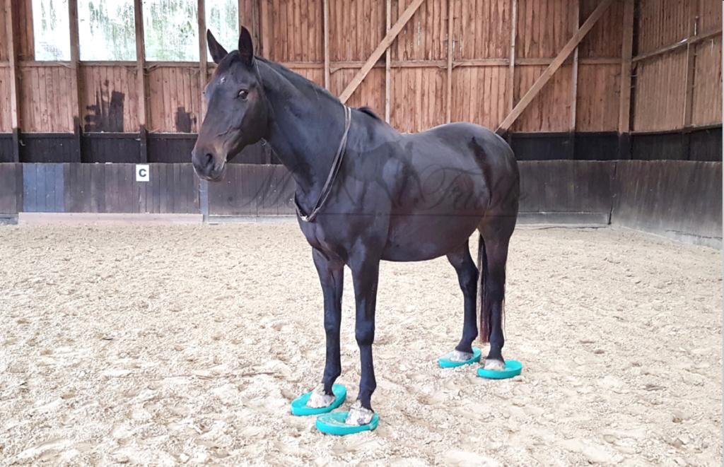 Pferdeyoga mit den Balance Pads.